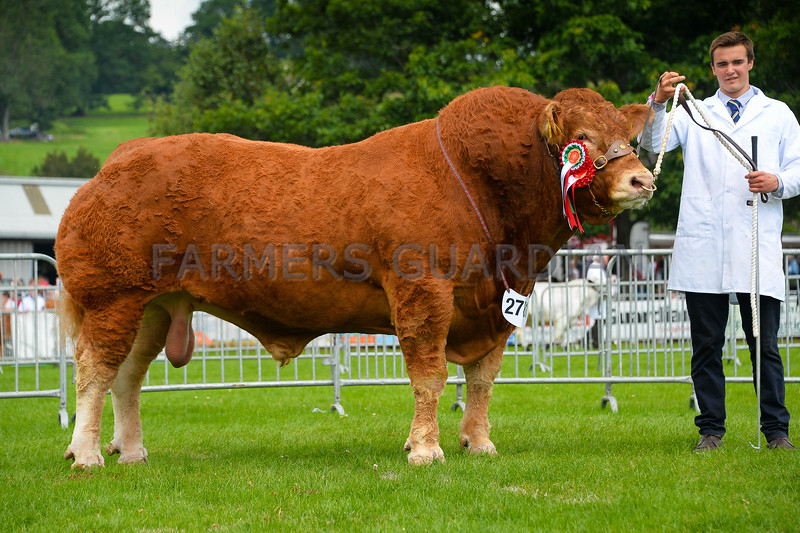 Limousin champion Whiskey Infinity from Harry Emslie.