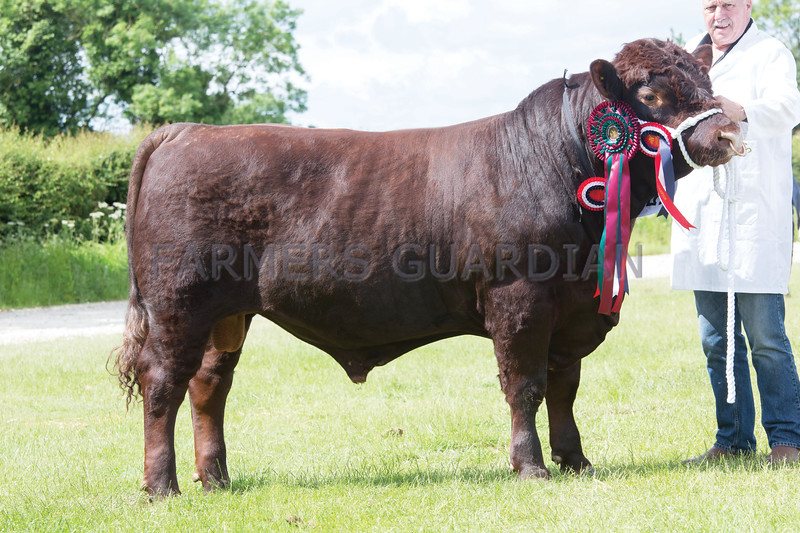 Rutland County Show 2017<br /> Woodenhouse Vinn owned by ME & CF Williams <br /> Picture Tim Scrivener 07850 303986<br /> ….covering agriculture in the UK….