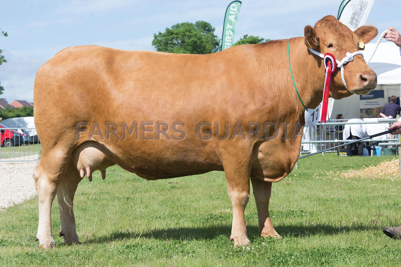 Rutland County Show 2017<br /> North View Clover owned by Oliver Brewin<br /> Picture Tim Scrivener 07850 303986<br /> ….covering agriculture in the UK….