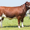 Rutland County Show 2016 <br /> Any other native Breed champion Greenley Gypsy Jay owned by Thomas Cockerill<br /> Picture Tim Scrivener 07850 303986 tim@agriphoto.com<br /> ….covering agriculture in the UK….