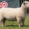 Rutland County Show 2016 <br /> Reserve overall champion by F L Readhead & Co<br /> Picture Tim Scrivener 07850 303986 tim@agriphoto.com<br /> ….covering agriculture in the UK….