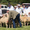 Rutland County Show 2016 <br /> Picture Tim Scrivener 07850 303986<br /> tim@agriphoto.com<br /> ….covering agriculture in the UK….