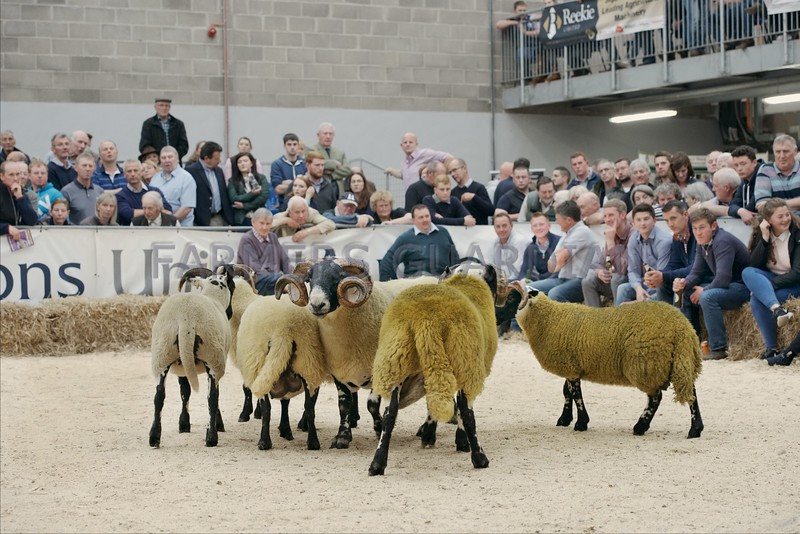 South Type judging at the Scottish National Show Stirling Sun 23rd
