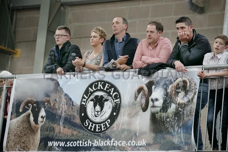 Scottish Blackface National Show Stirling Sun 23rd