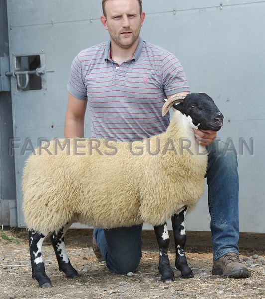 North of England Champion at the Scottish National Show at Stirling on Sun23rd a Ewe Lamb from Jamie Murray, Sewingshields,Haydon Bridge, Hexham.