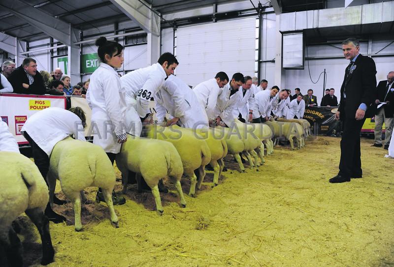 SWF sheep judge