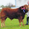 SWF Limousin