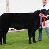 Smithfield Baby Beef