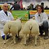Smithfield Lamb champs