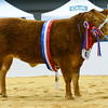 The supreme beef championship has gone to Jennifer Hyslop with the heifer champion Sassy Lassy.