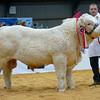 Champion pedigree calf Charolais bull calf Drumshane Levi from Mr Darren Knox.