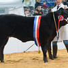 Baby Beef Champion Limousin sired heifer Rio from Mr N.E. Slack.