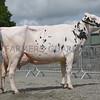 S of E Holstein