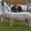 S of E Pig