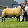 The interbreed sheep champion, a Bleu du Maine ram from P. Tait.