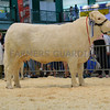 The reserve beef interbreed champion, British Charolais heifer with calf at foot, Newroddige Jody from J. D. Leavesley