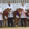 STARS OF THE FUTURE 6TH PEDIGREE CALF SHOW STIRLING MART SAT14TH NOV.  LINE -UP OF LIMOUSIN CALVES FROM ALLAN CAMPBELL,STRAWFRANK FARM,CARSTAIRS, LANARK. LOTS 158 &179 WERE WINNERS OF THE JOE WATSON PAIRS.