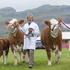 STIRLING SHOW 15 THE MCCULLOCH  SIMMENTAL TEAM.