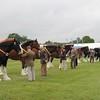 Suffolk H Horse