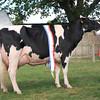 Suffolk Daity champ