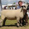 Suffolk Res sheep champ