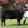 Suffolk Native champ