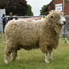 Suffolk Leicester Longwool