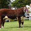 Suffolk Hereford