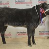 "THAINSTONE CLASSIC 15 YF LOT 1 OPEN CHAMPION ""JELLY BABE"" FROM FODDERLETTER FARMS, TOMINTOUL."
