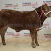THAINSTONE CLASSIC 15 YF LOT 8 HOME BRED  BULLOCK CHAMPION <br /> FROM FODDERLETTER FARMS, TOMINTOUL.