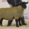 Thainstone Classic 15 Lot 166 SUFFOLK CHAMPION FROM JAMES INNES & SONS, DUNSCROFT, HUNTLY.
