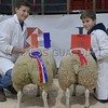 THAINSTONE CLASSIC 15 RESERVE CHAMPION PEN OF LAMBS WERE SHOWN BY ALASTAIR & CALLUM NAISMITH, GRANGEHALL, MARYKIRK.