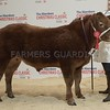 "THAINSTONE CLASSIC 15 YF LOT 17 BULLOCK CHAMPION""RODGER THE DODGER"" FROM REBECCA STUART, MURRIAL, INSCH, HUNTLY."