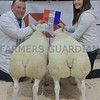 THAINSTONE CLASSIC 15 RESERVE CHAMPION BUTCHERS LAMBS WERE SHOWN BY CALUM ANGUS, MEY, THURSO.