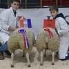 THAINSTONE CLASSIC 15 RESERVE CHAMPION PEN OF LAMBS WERE SHOWN BY ALASTAIR & CALLUMN NAISMITH, GRANGEHALL, MARYKIRK.