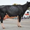 SW Dairy Show-7846