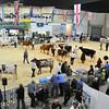 SW Dairy Show-7784