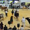 SW Dairy Show-7781