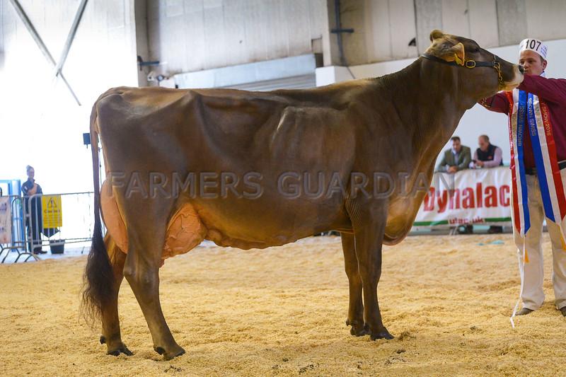SW DAIRY SHOW Brown Swiss-6002