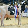 SW DAIRY SHOW Holstein-6147
