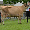 The Jersey and reserve dairy interbreed champion, Rapid Bay UK Cameo from Victoria and June Diamond.