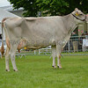 The Any Other Breed Dairy champion, Brown Swiss Soulseat Pitagora Molly from Victoria and June Diamond.