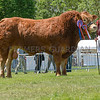The interbreed beef champion, Limousin bull Dinmore Lionheart from Paul Dawes.