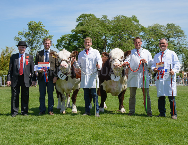 The Hereford, winners of the interbreed pair of beef animals. Dendor 1 Jennefer 15th from Sky High Herefords and Lowesmoor 1 Maverick from M. J. Clark.