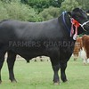 """Aberdeen Angus Champion at Turriff Show 16 Bull  'Tonley Elgar""""from Neil Wattie, Mains of Tonley, Alford."""