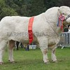 Charolais and Cattle Interbreed Champion at Turriff Show 16 Bull from John Irvine & Son,inverlochy, Tomintoul.