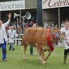 The Limousin and reserve Interbreed Champion at Turriff Show 16 from Aileen Ritchie, Tamala seen in a happy mood.