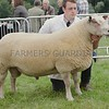 Charollais Sheep Champion at Turriff Show 16. A tup from W&C Ingram, Logie Durno, Pitcaple, Inverurie.