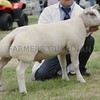 The Beltex National Show was held at Turriff Show 16. The Champion  Tup  was shown by Alan Munro, Landau, Fearn, Ross-shire