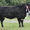 British Blue Champion at Turriff Show 16. Cow from J K Manson, Upper Northfields, Hempriggs, Wick.